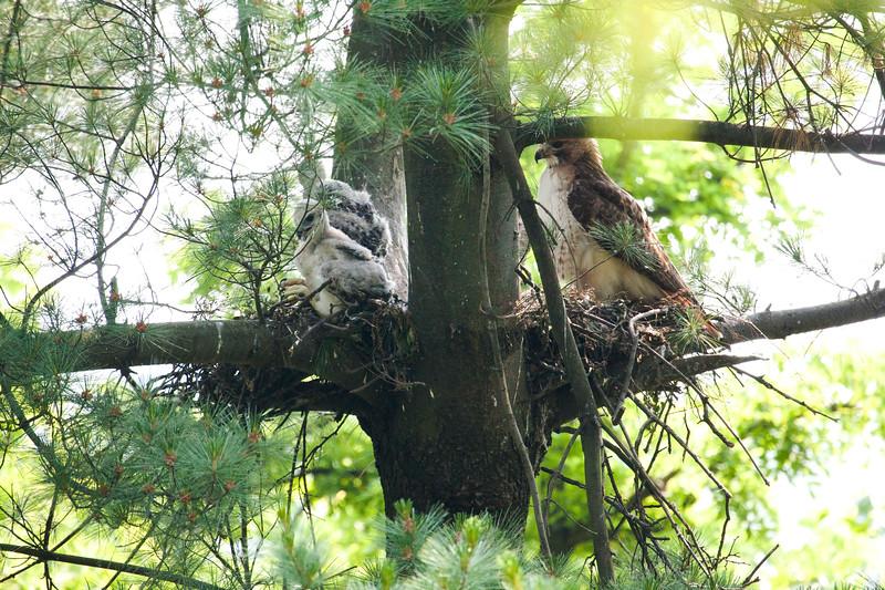 Bird Watching 01