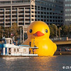 Rubber Duck 01