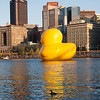Rubber Duck 03