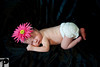 Utah Newborn Photographer-4