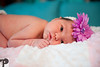 Utah Newborn Photographer-57