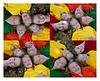 head composite 8x10 copy