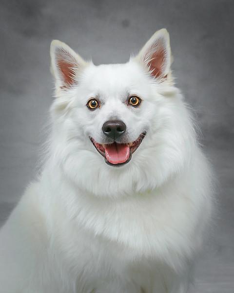 A happy doggie!
