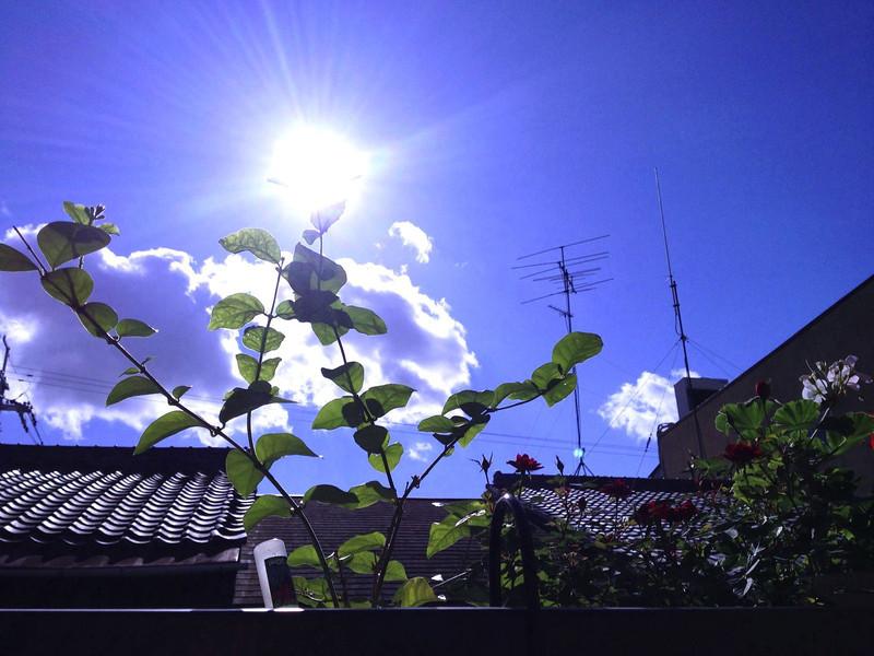 File No.68<br /> <br /> 「北陸地方は落雷、雹にご注意ください」<br /> <br /> 11/19。父の生まれた日。だけど京都はこんな爽やかな空で。しかし父は場所が場所なら神様と崇められてもおかしくないであろう男だった。<br /> <br /> 「天もさぞかしお喜びでしょう」ン十年前、父と母の結婚式はドンドンジャラジャラ、雷さまの太鼓に雨に空はひどい大荒れ。当時、母との縁談に多少不服だった祖母(父の母)は、そう皮肉たっぷりに言ったそうだ。<br /> <br /> 父が決めたわたしの誕生の日(帝王切開)は大雪で、夏の沖縄も松島も、湯布院も奥軽井沢も、父が歩けばいつでもどこでも雨、雨、雨。極めつけは降らない尾道にまさかの雪。天使の輪のごとく頭上に輝く雨雲を北に東に動かす。「あ、明後日雨だって」「お父さん、来るんでしょ」「ですよねー」天気予報を観ながらヒゲ玉さんとのいつもの会話。<br /> <br /> こんなとんでも雨男な父を祝って、今日の金沢もやっぱり大荒れみたい。来年77回目の誕生日に、どこか干ばつの土地に送り込んでみたい。信じられないくらい歴史に残る雨嵐になるはずだもん。