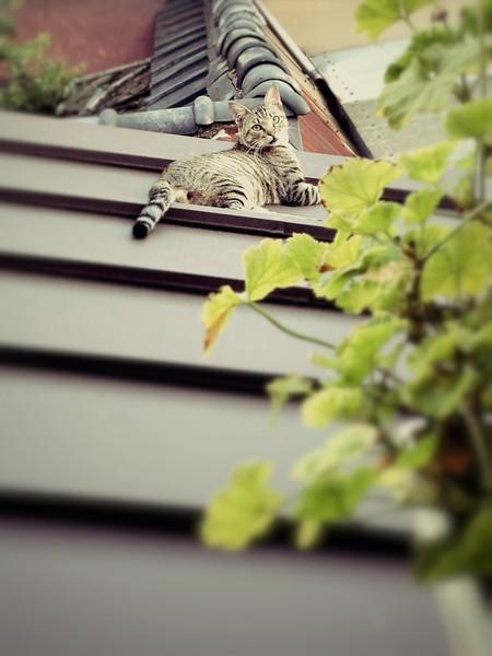 File No.78<br /> <br /> そして。<br /> <br /> この町に引っ越して来て、タオとハナコが屋根越しに「ヤア!」と現れてから、もう一周してしまったカレンダー。<br /> <br /> 去年の秋にタオが姿を消してから5ヶ月ほどが過ぎて、ひな祭りも過ぎたこの界隈のおネコさまたちはやけに静かにひっそりしている。ハナコもうすちゃんも、今はほとんど気配がない。タオの天敵クロも一度見たくらい。エルサレムでもそうだったけど、ノラ猫たちってある意味、放浪の民でもあるんだね。<br /> <br /> タオ、くーし、たんたん、銀ちゃん。そしてエルサレムのタタやモー、一緒に過ごしたどの子もきっと元気で幸せだと言い聞かせ、ココロの猫型の穴が埋まる日を夢見る星の明るい夜。