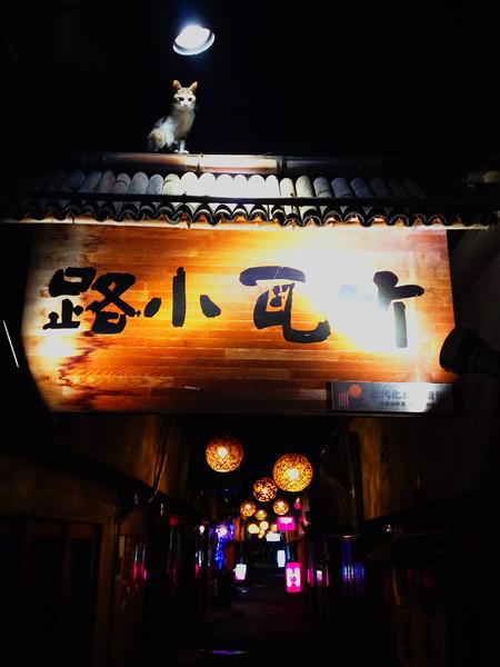File No. 86<br /> <br /> 6月のある夜の別府、竹瓦で。<br /> <br /> ふと感じた視線に見上げると、<br /> <br /> 猫。
