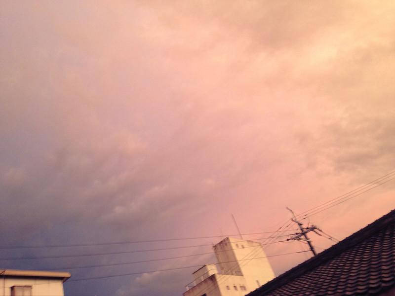 File No.48<br /> <br /> ゾクッ。<br /> <br /> 9月になって、猛暑が去った途端に夜が冷え込んで、まったくおかしな日々。ここ数日の、警戒注意報がザワザワ激しく冷たい大雨が上がった。なんだかあたりの光がいつもの雨上がりとはちがう気がして、外に出た。<br /> <br /> あたりは暗く、でもちょっと恐いほどの不思議な光につつまれて、西の空だけが低く激しく燃えていた。まるでこれからなにかよくない事でもおきそうな映画のシーンのようだった。そんな空のむこうから、雨合羽がてるてる坊主なヒゲ玉さん、帰る。玄関先でまるで未来警察なヘルメットを脱ぎながら、なんだか嫌な空だと言った。<br /> <br /> 今日はハナちゃんと子にゃんたちの姿見えず。タオはベランダの室外機上の箱で丸々一日グースカピー。