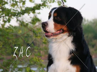 Zac 2228