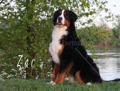 Zac 2214