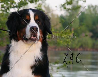 Zac 2207