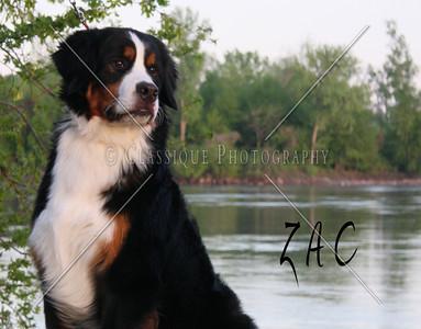 Zac 2211