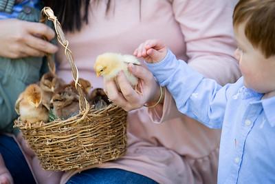 April_baby chicks-41