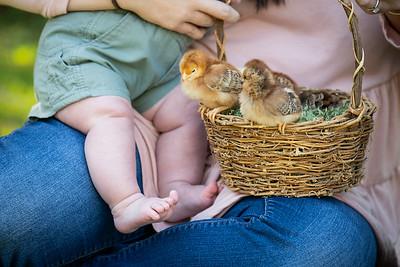 April_baby chicks-37