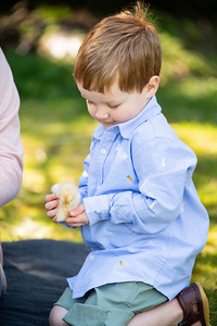 April_baby chicks-42