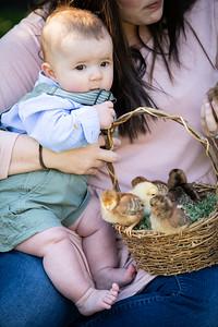 April_baby chicks-38