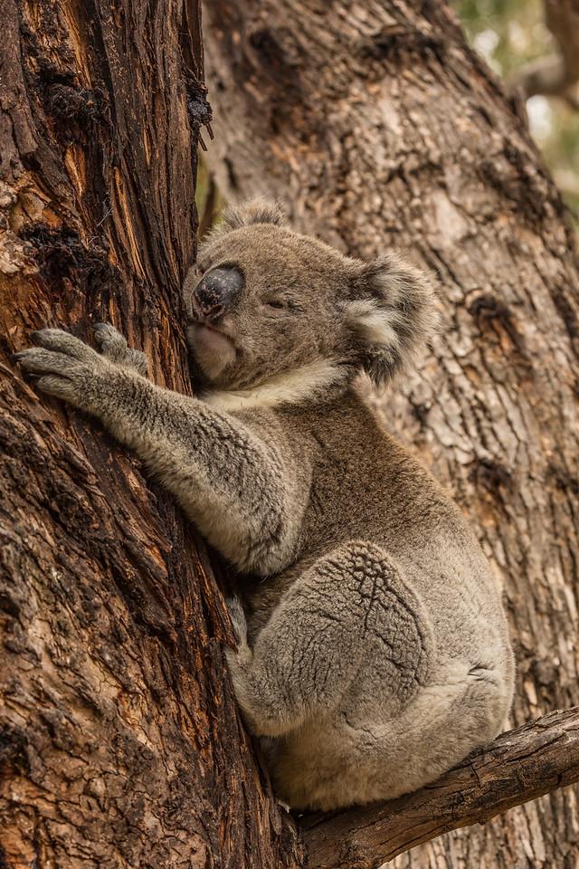 Tree Hugger 2