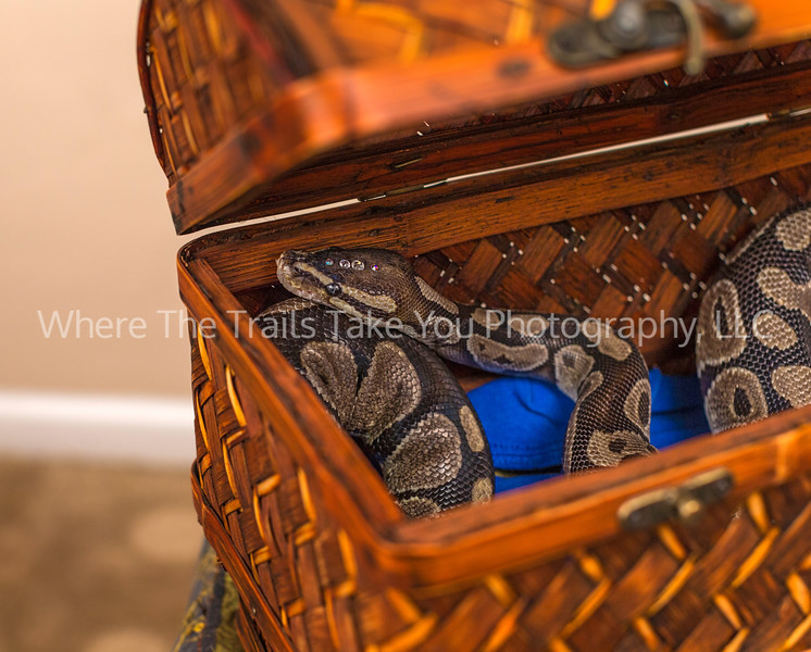 Hissy In His Box