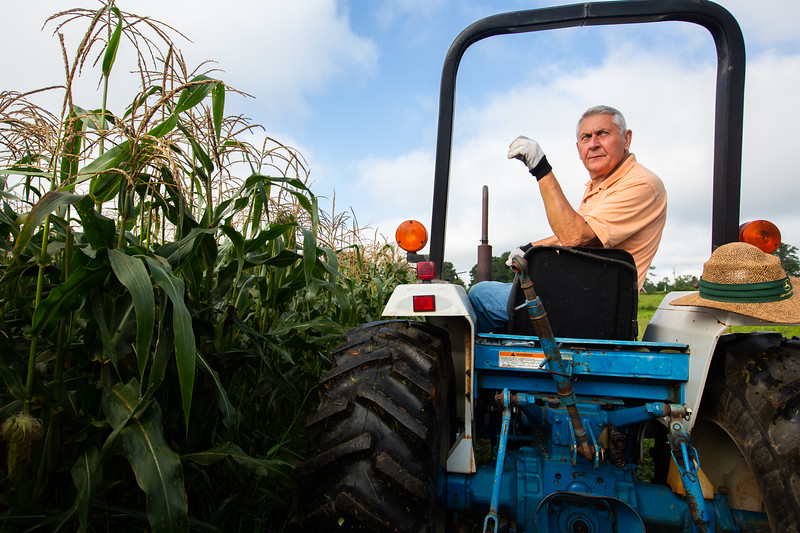 Nadav Soroker/Times-Georgian  Richard Morris looks back from his seat in the tractor during a corn harvest to give to local seniors and senior living centers, on Wednesday, July 25, 2018.