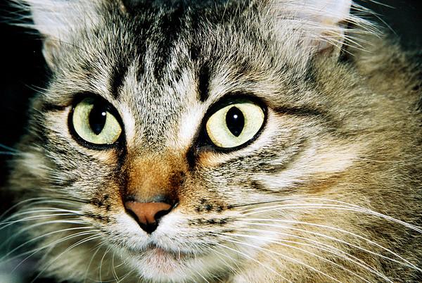Señorita Verdita - Cat