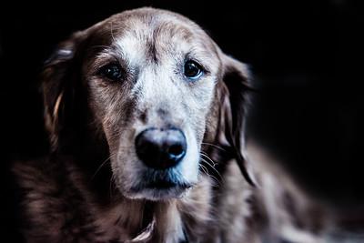 Dog Portraiture