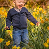 Boy Among the Daffodils