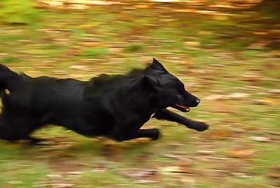 Run, Rosie, Run