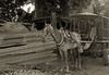 horse-&-cartTrinidad