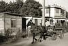school-horse-&-cartTrinidad