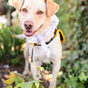 MuttScouts_20140621-154