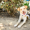MuttScouts_20140621-229