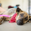 MuttScouts_20140621-238