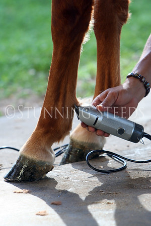 Equine Stock Images - Call for info
