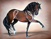 """Sold - Pastel Painting - Bay Andalusian Stallion """"Rublo"""""""