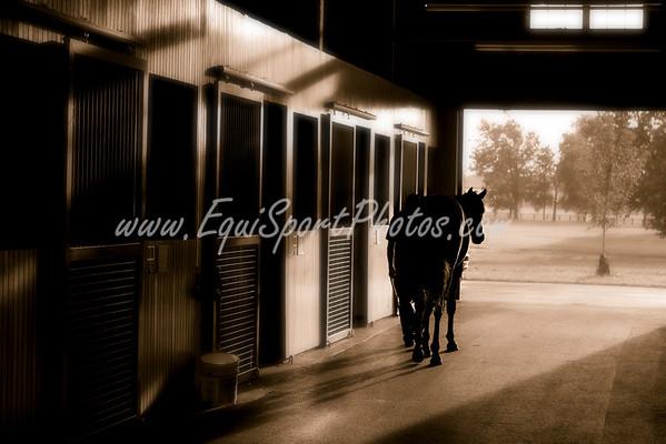 SpendthriftSunrise06 27 2008 jpg-50