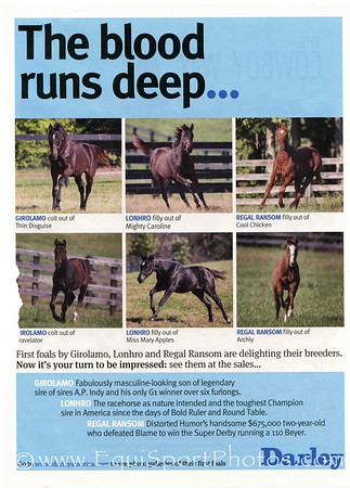 Weanling paddock shots. Darley ad in Blood-Horse 11.02.13.