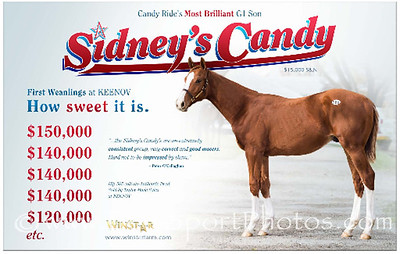 Sidney's Candy ad in the TDN 11.15.2013