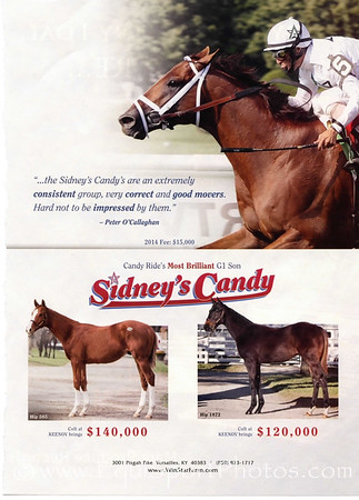 Yearling Conformations on the Keeneland Sales grounds. WinStar ad in Blood-Horse 11.23.13.