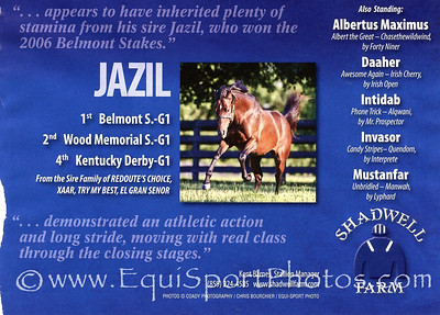 Jazil, Shadwell ad in Blood-Horse 2.18.2012