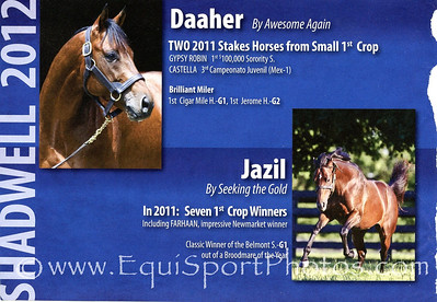 Daaher & Jazil, Shadwell ad in Blood-Horse 2.04.2012