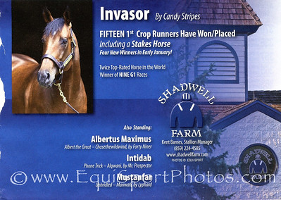 Invasor, Shadwell ad in Blood-Horse 2.04.2012