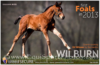 Spendthrift ad in TDN 4.07.13.