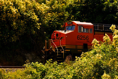 CAPTION: Train LOCATION: Boulevard Park, Bellingham, Washington DATE: 6-27-10 NOTES:  HEADING: