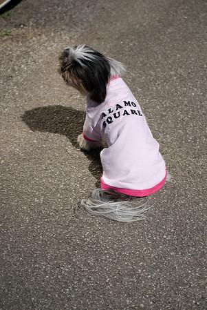 Park Pet Wear-22