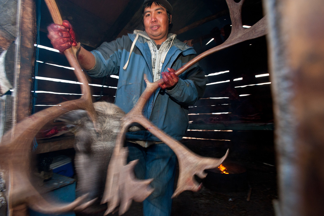 Caribou Head, Gwich'in Heart