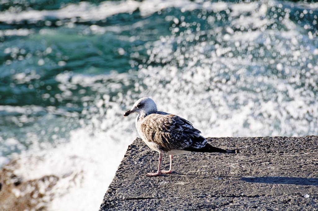 porto das Barcas - Odemira - 7833