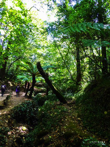 Serra do Bussaco