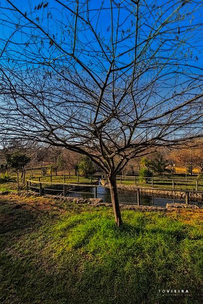 Parque das Cales<br />  - Oiã, Oliveira do Bairro