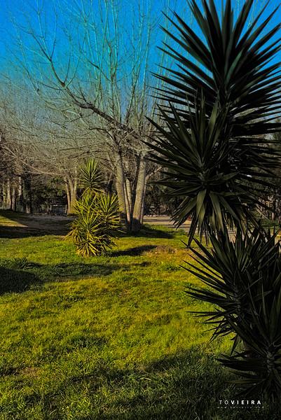 Parque da Fonte Bebe e Vai-te<br />  - Palhaça, Oliveira do Bairro