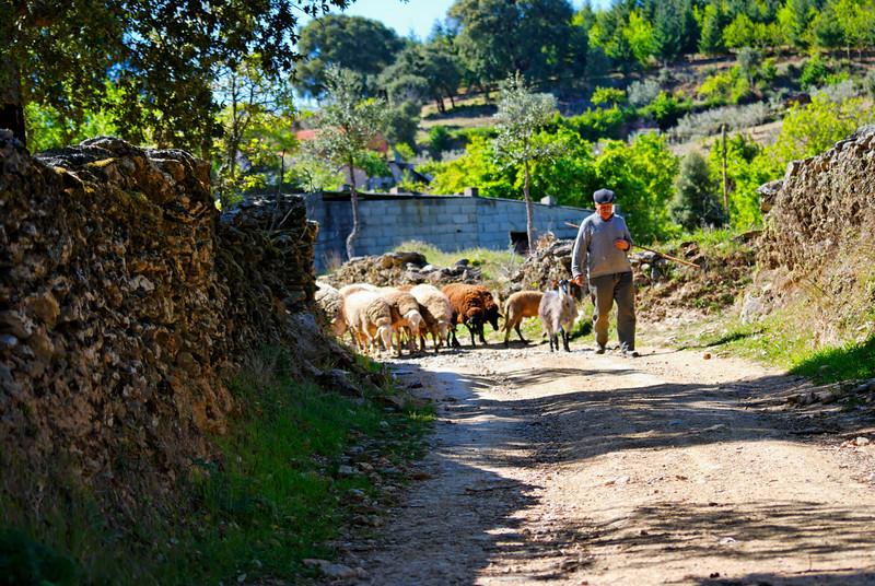 Vales - Alfandega-da-fe -20090502  -  9932