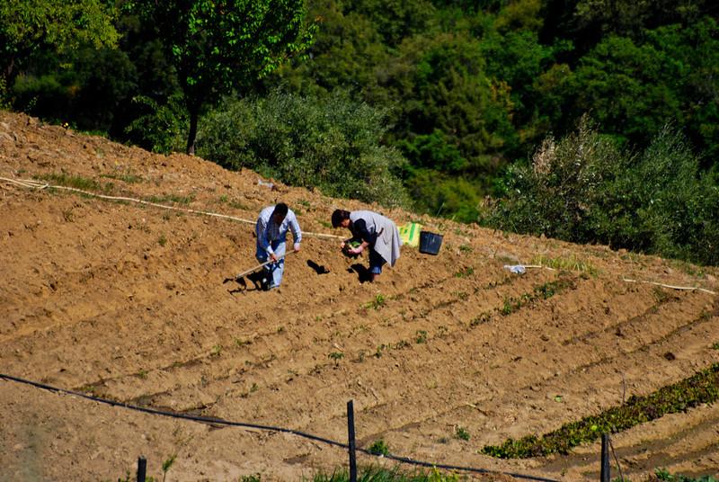 Vilares da Vilariça-Alfandega da fé-20090501  -  9744